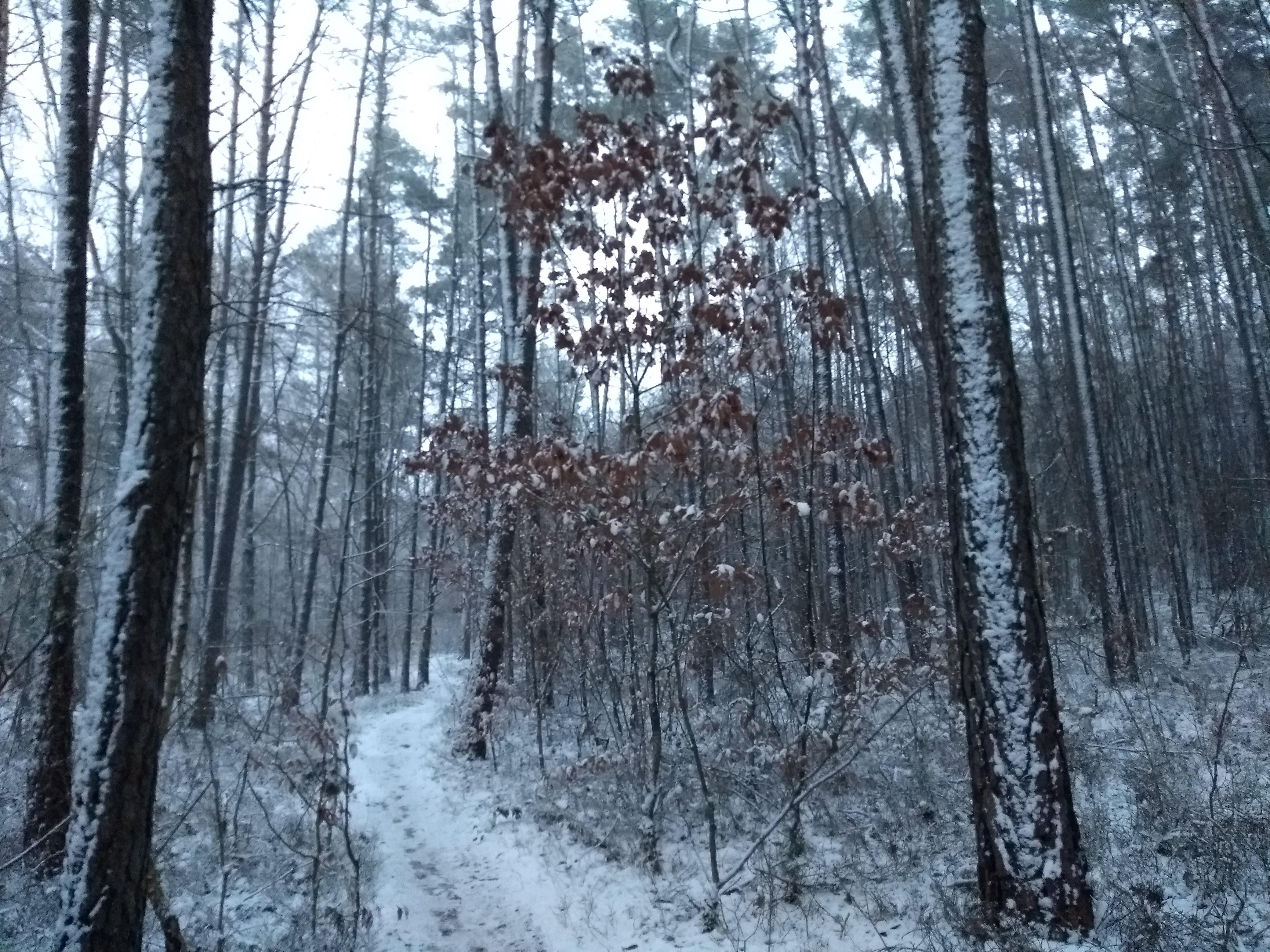 Fallender Schnee