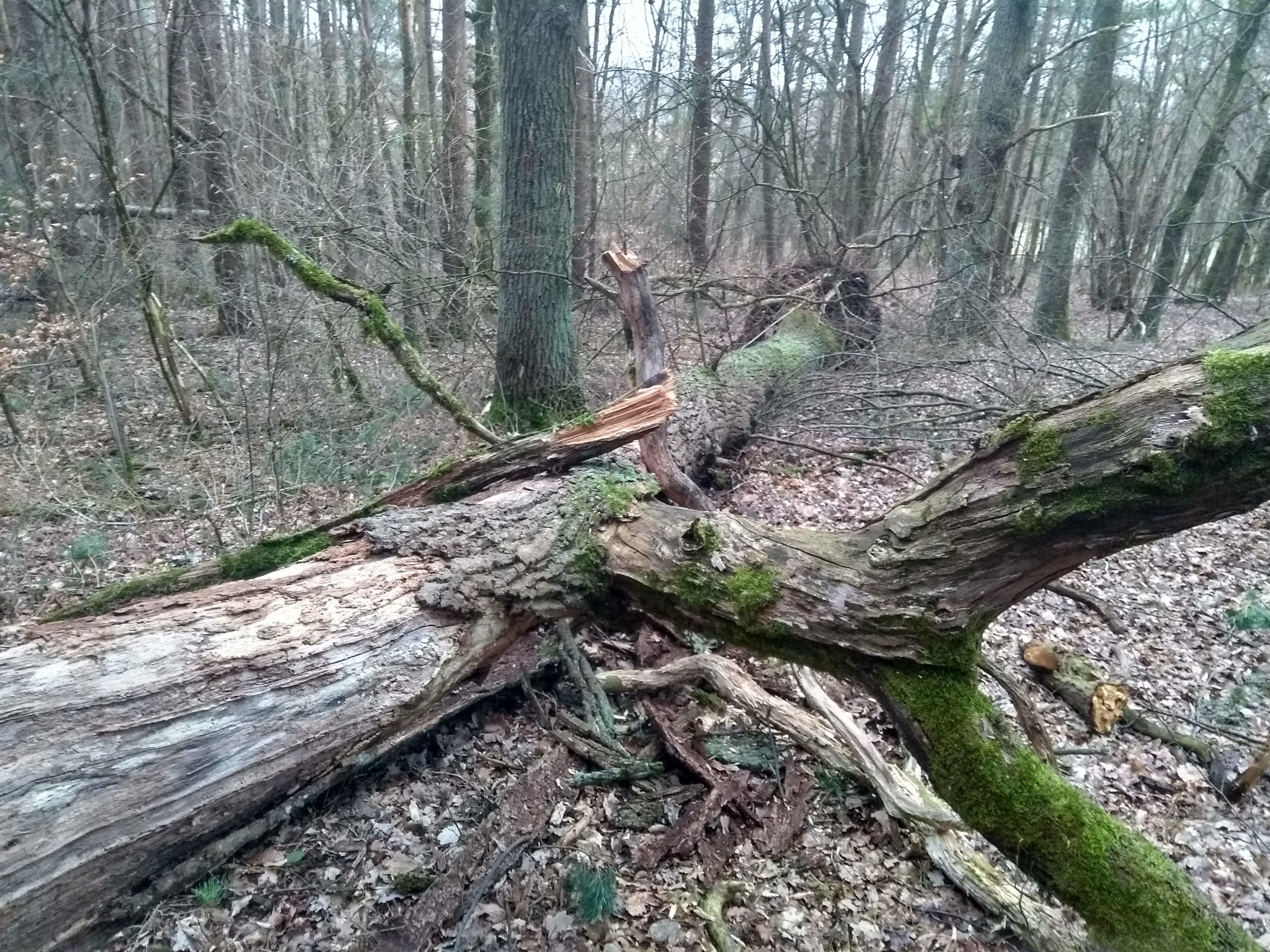 Fallender Baum im Wind